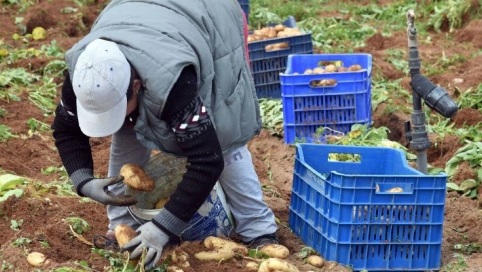 ΥΠΑΑΤ-Επιδοτήσεις: Δευτέρα θα κατατεθούν όλα λεφτά αποζημιώσεων δικαιούχους αγρότες